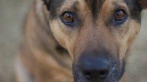 dogstare-flickruseretersigni-615x345__main